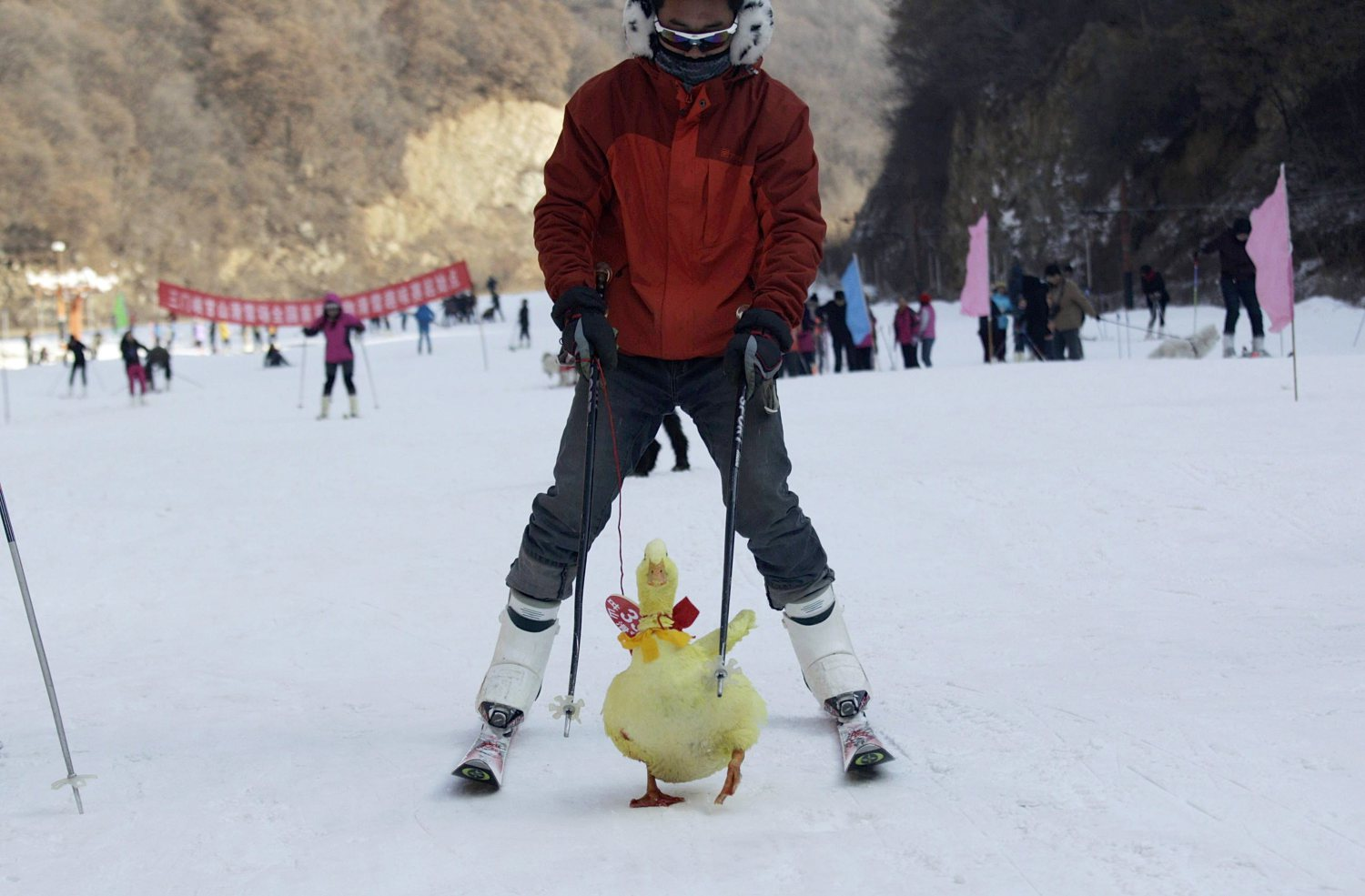 Skiing with a duck