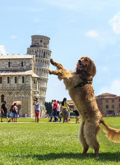 Dog in Pisa