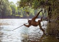 An Orangutan from a zoo reintroduced to the wild in Borneo began spear fishing after watching local fisherman