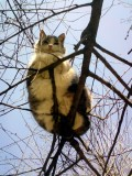 Fat Cat on a Small Branch