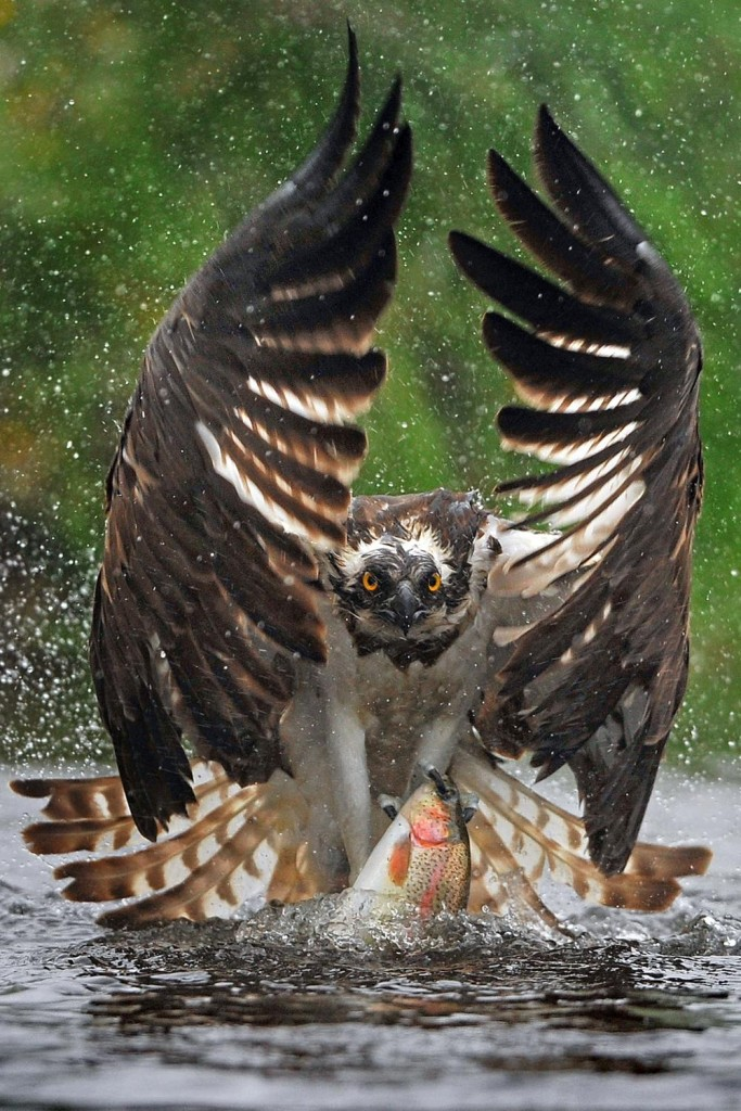 Hawk and Fish Fast Food