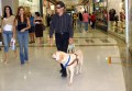 Guide Dog for the Blind